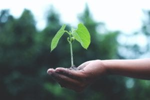 A picture containing a seedling